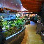 our-freshwater-aquarium